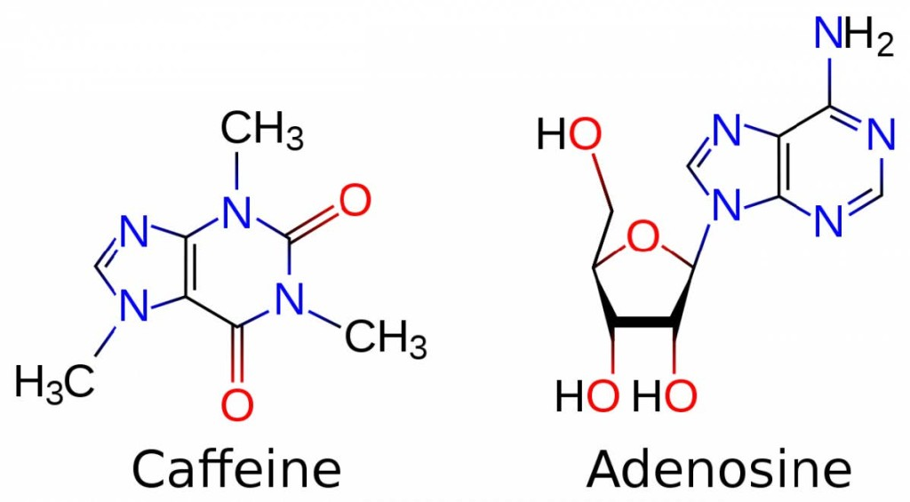 caffeine_adenosine