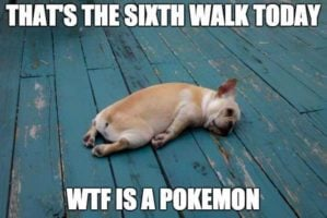Dog walk Pokemon Go meme