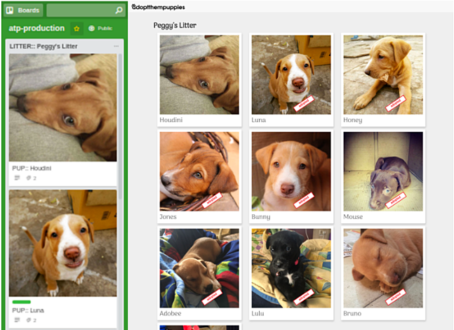Dog adoption Trello board